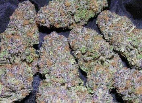 Purple Urkle2