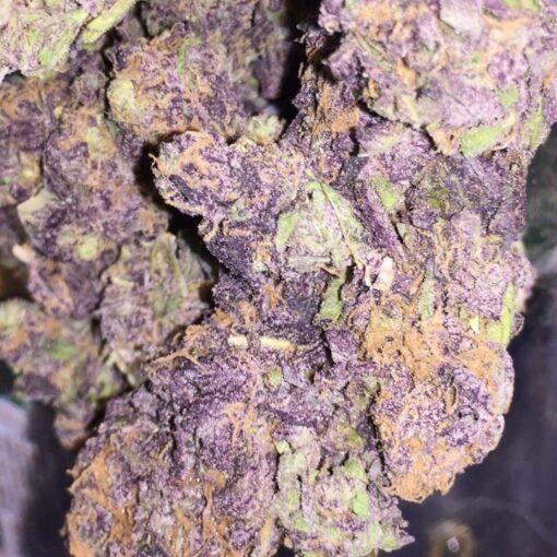 purple Haze1