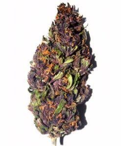 Purple Haze Strain